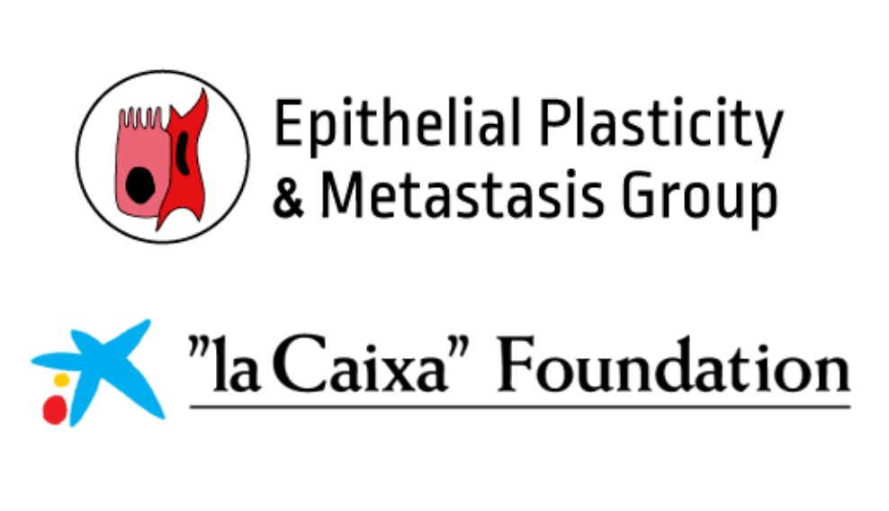 "Epithelial Plasticity and Metastasis Group logo; ""la Caixa"" Foundation logo"